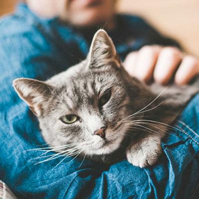 cat | Happy Pets Boise